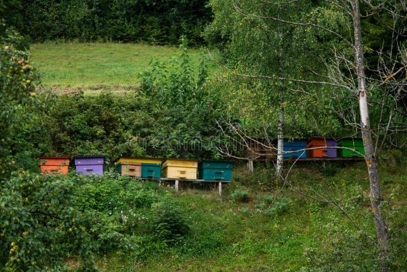 木蜂蜂房在庭院里 库存照片
