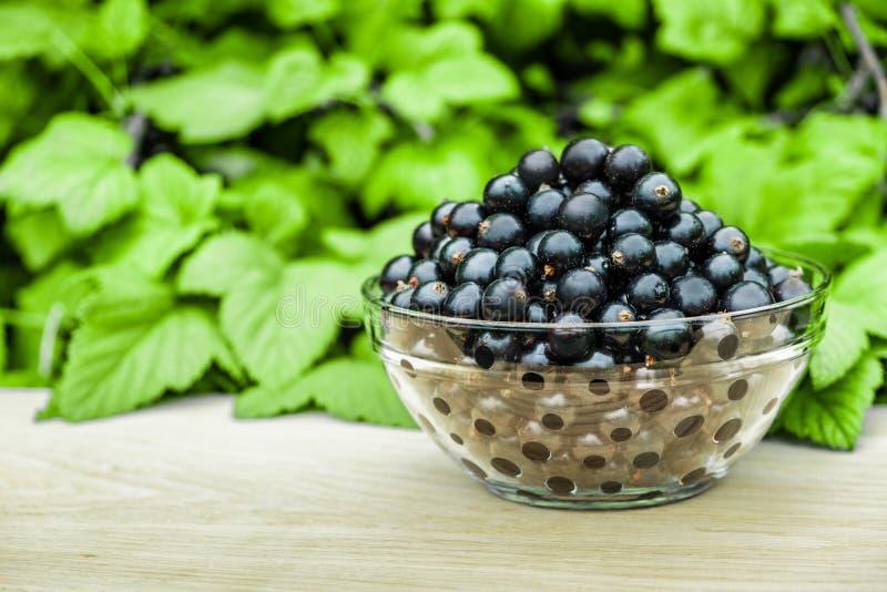 木表面上的新鲜的黑醋栗在绿色灌木背景的一个透明碗  图库摄影