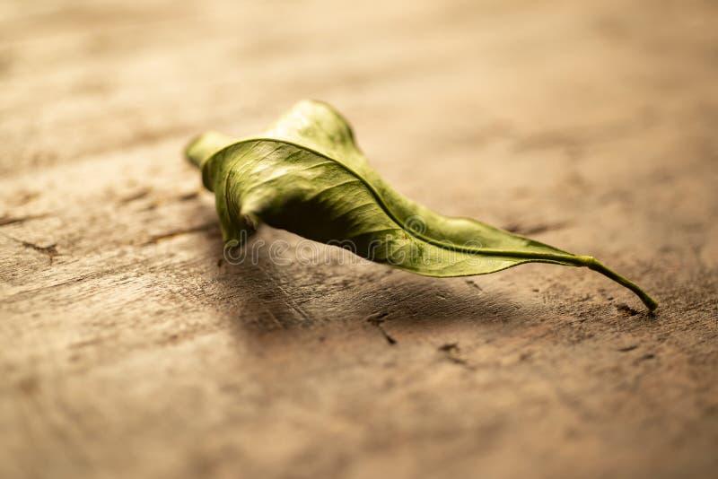 木表面上的死的叶子 图库摄影