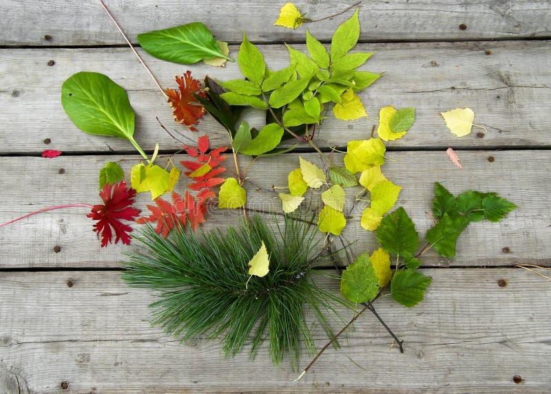 木表面上的秋叶 与下落的叶子的静物画 库存照片