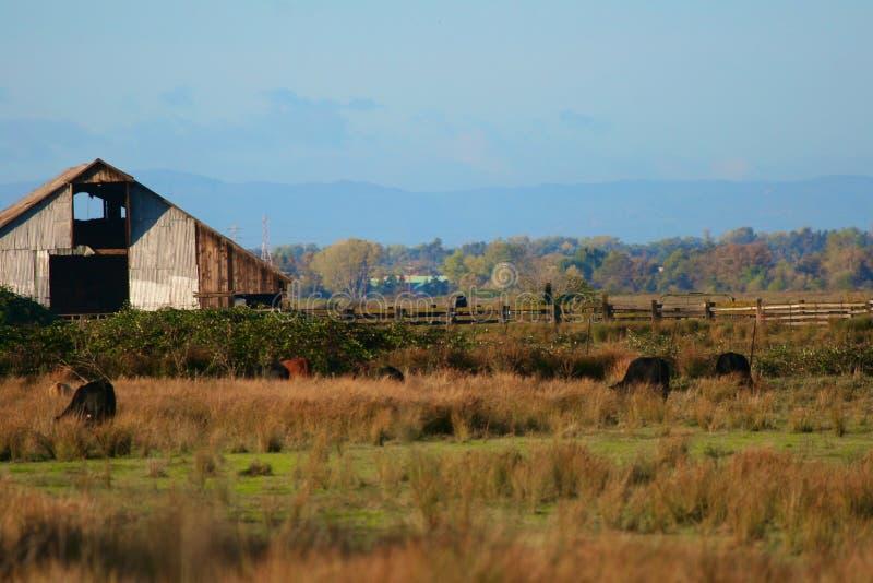 木谷仓的农场 库存照片