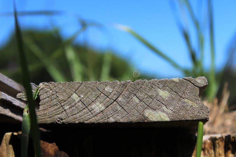 木谷物 库存照片