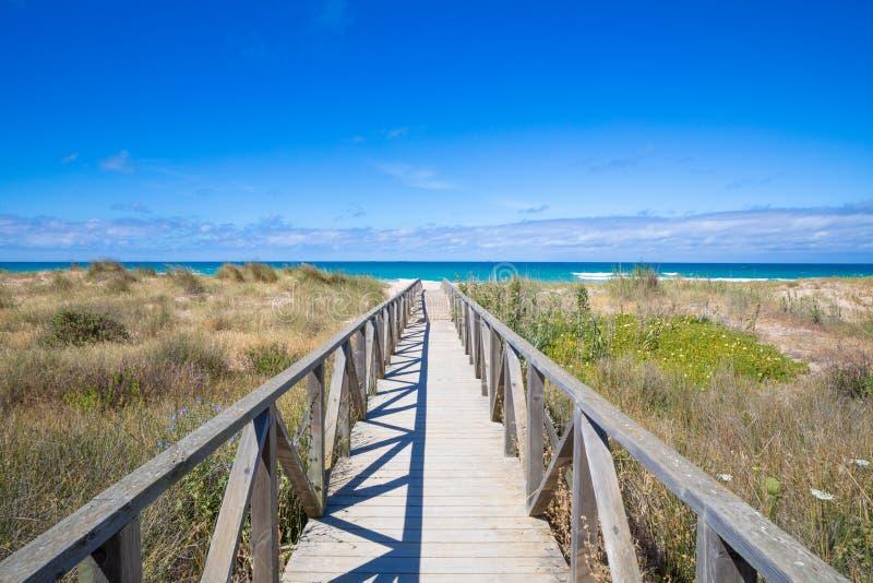木走道送往手掌海滩和海洋 图库摄影