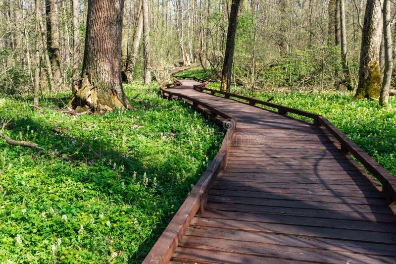 木足迹在森林里,透视图,背景,沃罗涅日地区,俄罗斯 免版税库存照片