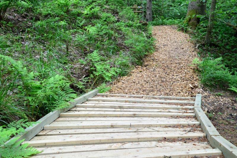 木路在森林锡古尔达里 图库摄影