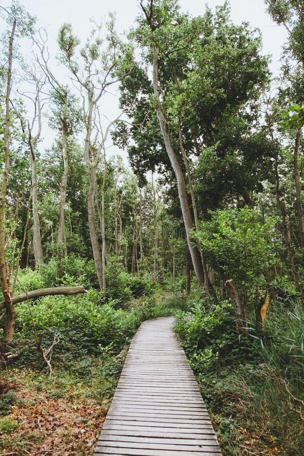 木轨道方式到一个绿色森林里 免版税库存图片