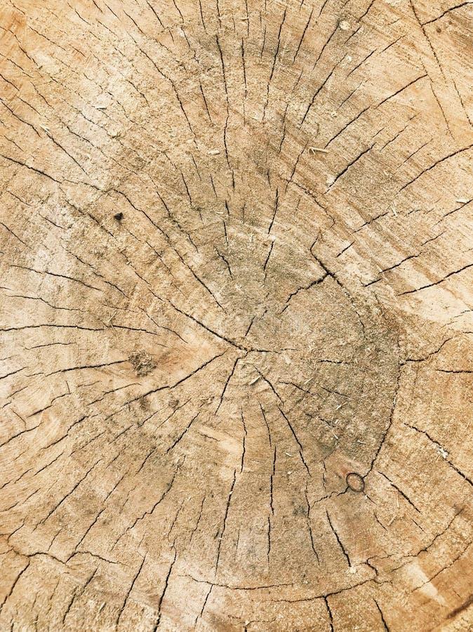木逗人喜爱的纹理 免版税库存照片