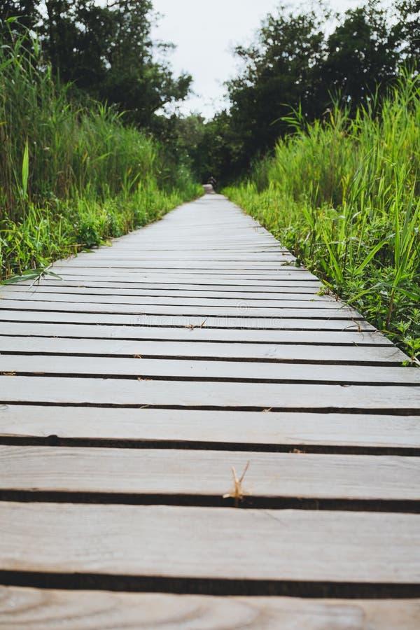 木道路停泊与芦苇 库存图片