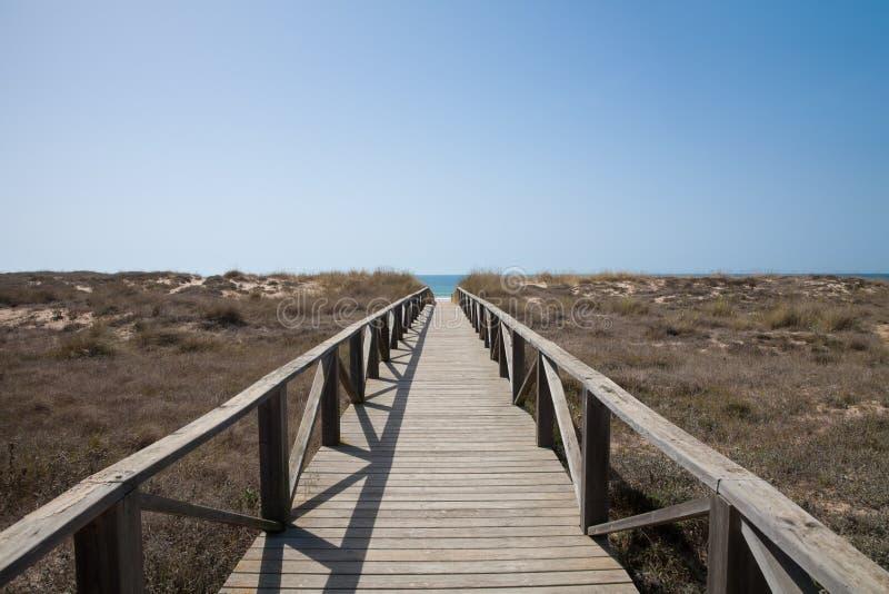木道路向水平的海洋 免版税库存照片