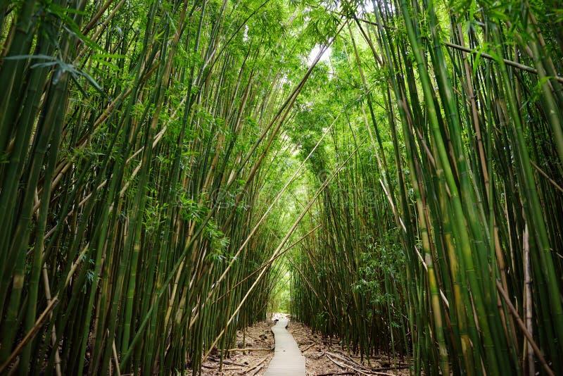 木道路穿过密集的竹森林,导致著名Waimoku落 普遍的Pipiwai足迹在毛伊的Haleakala国家公园 库存照片