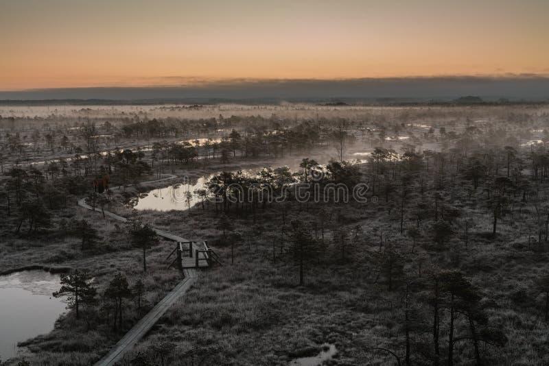 木道路,在沼泽的路在与冻树的早期的冬天早晨 免版税库存图片