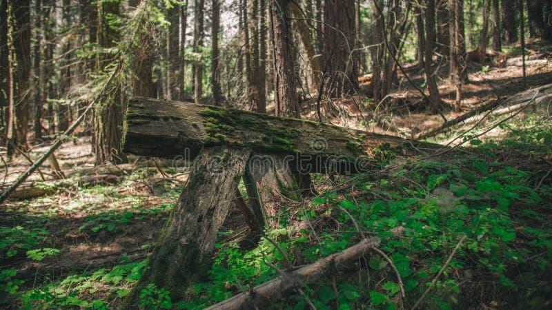 木铁路特写镜头有生长有自然本底的青苔的在优胜美地NationalPark附近 免版税库存照片