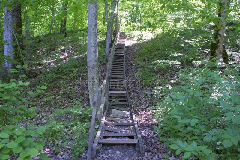木,老楼梯在森林 免版税图库摄影