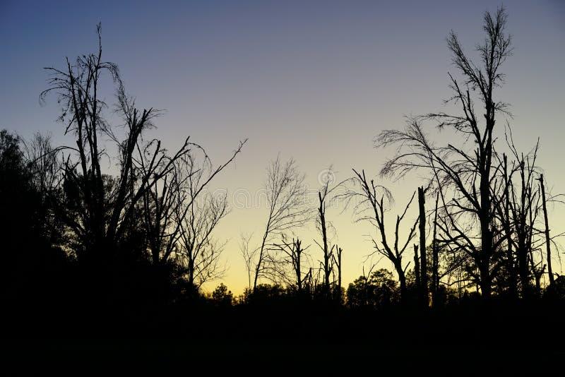 木头和太阳集合 免版税库存图片