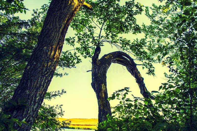 木头和森林 免版税库存照片