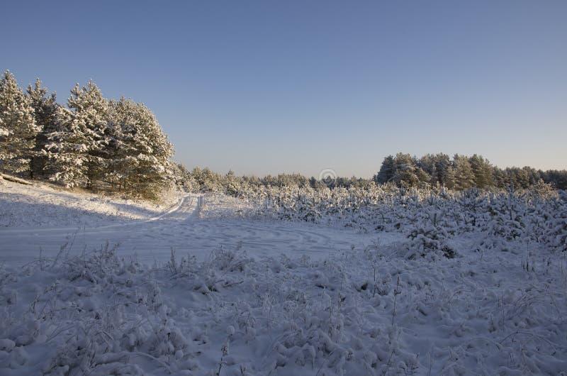 木头和路的边缘的冷杉树丛 免版税图库摄影
