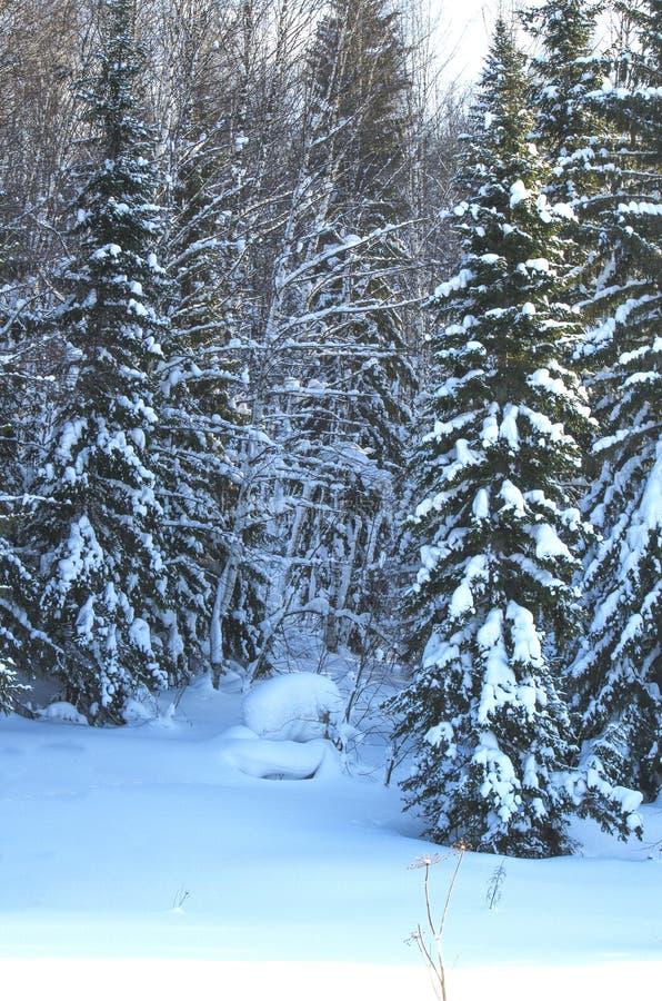木头在冬天在俄罗斯西伯利亚 库存照片