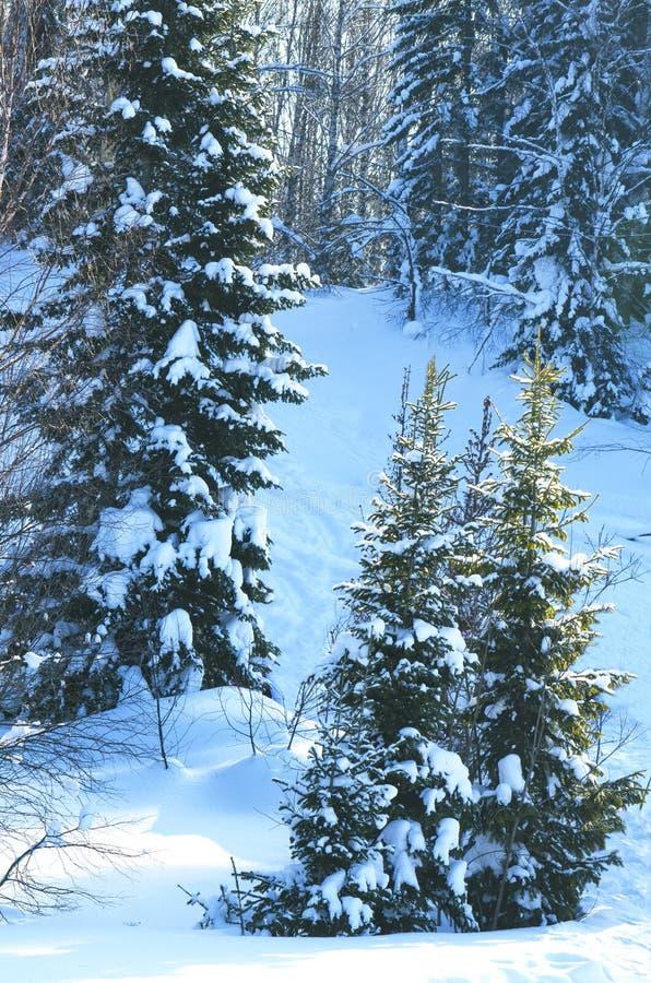 木头在冬天在俄罗斯西伯利亚 库存图片