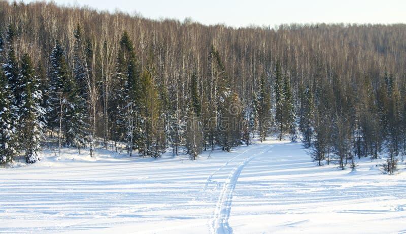 木头在冬天在俄罗斯西伯利亚 免版税库存照片
