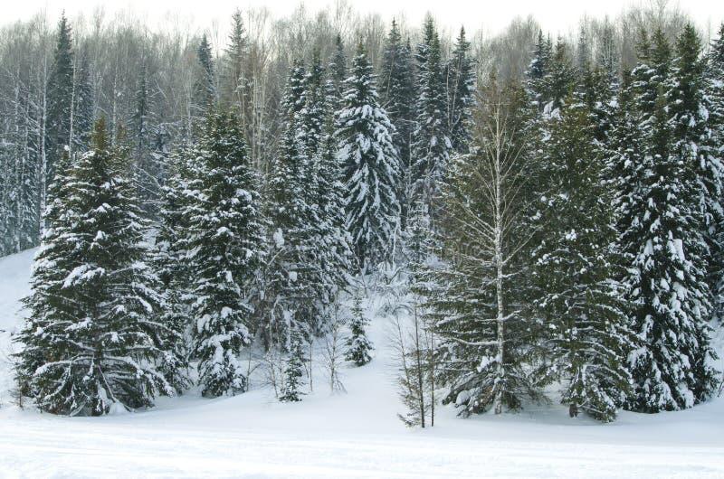 木头在冬天在俄罗斯西伯利亚 免版税库存图片