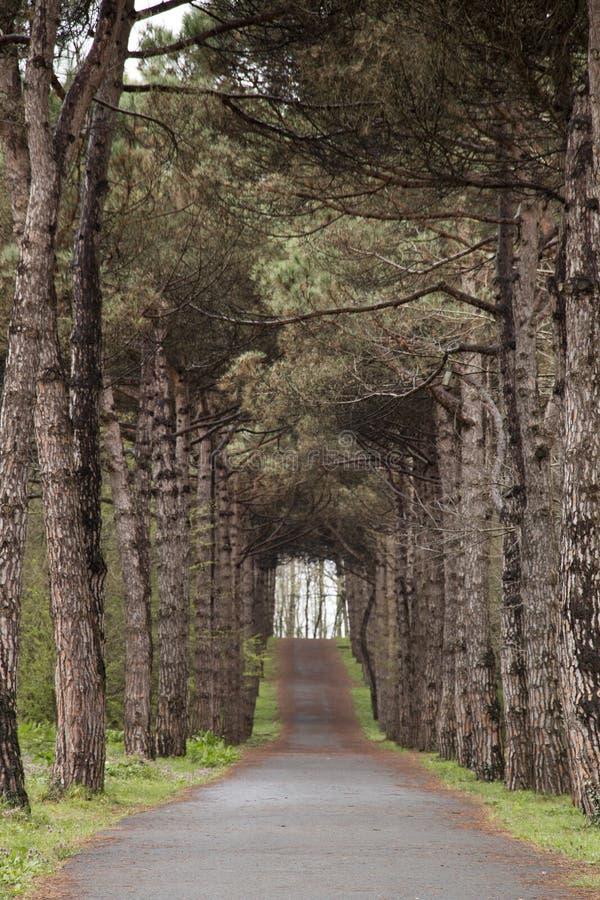 木头在森林里 免版税库存图片
