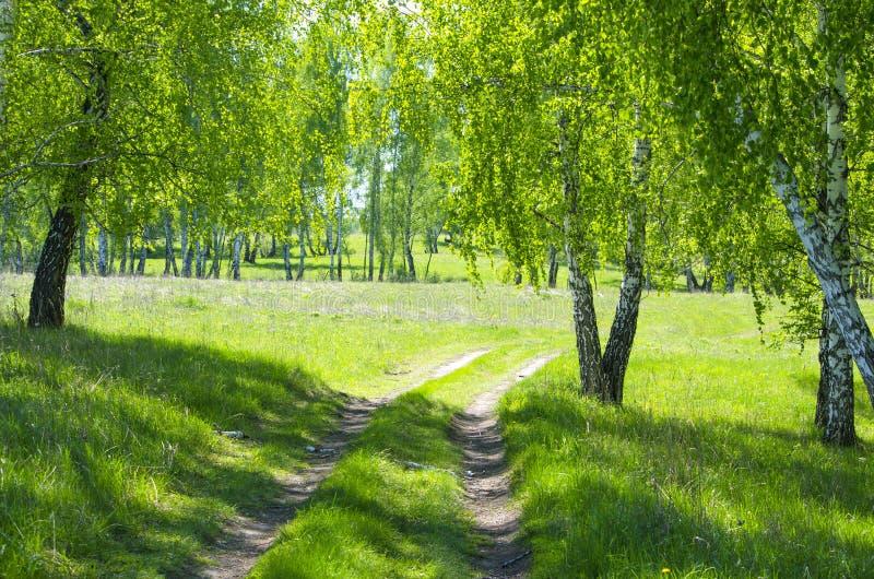 木头在Sibire在春天 图库摄影