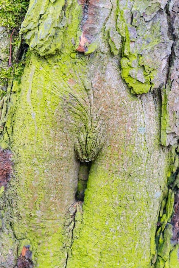 木织地不很细与绿色青苔 免版税库存照片
