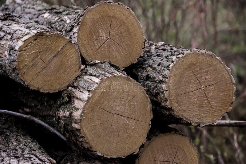 木柴 木头收获 库存照片