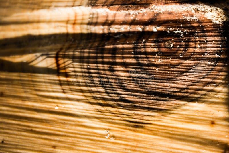 木头的纹理,年轮 库存照片