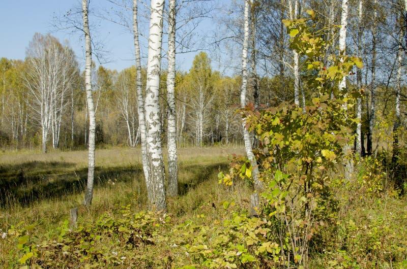 木头的美好的风景在秋天的 图库摄影