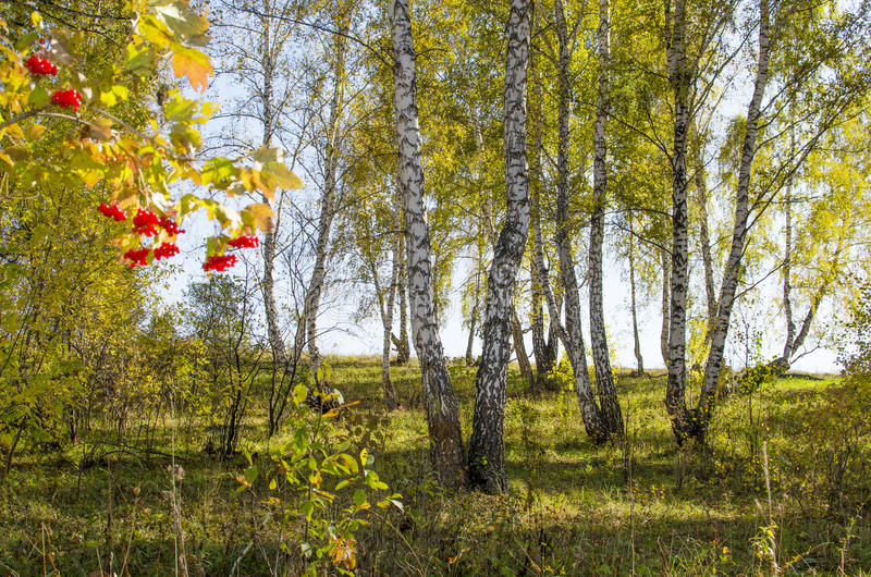 木头的美好的风景在秋天的 免版税库存照片