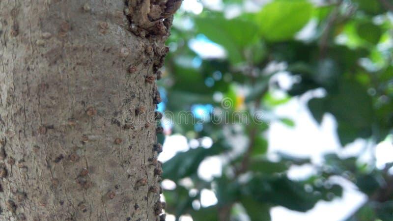 木质 库存照片