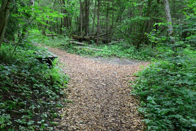 木passway在森林锡古尔达里 免版税图库摄影