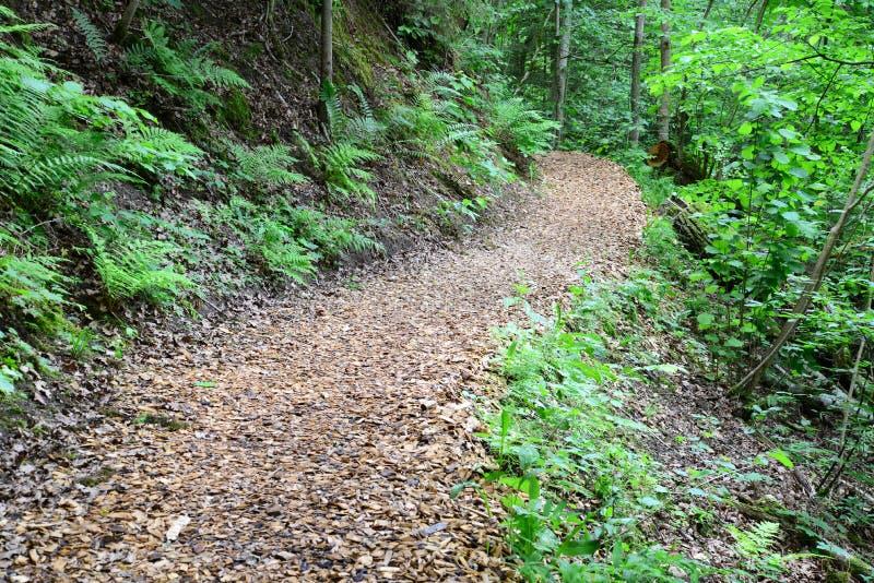 木passway在森林锡古尔达里 库存照片