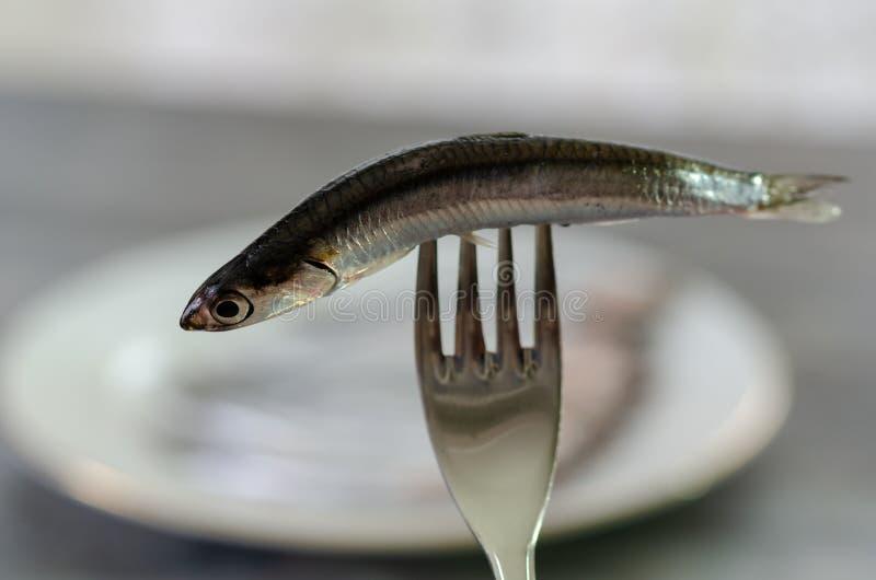 未加工和新鲜的鲥鱼鱼 免版税图库摄影