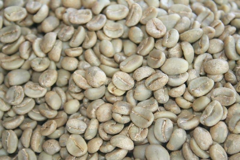 未加工的咖啡豆被排序了,优良品质咖啡豆出口到国外 免版税库存照片