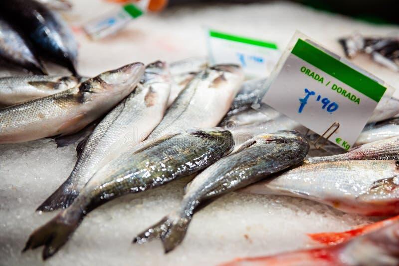 未加工的新鲜的海鲜dorada鱼 库存照片