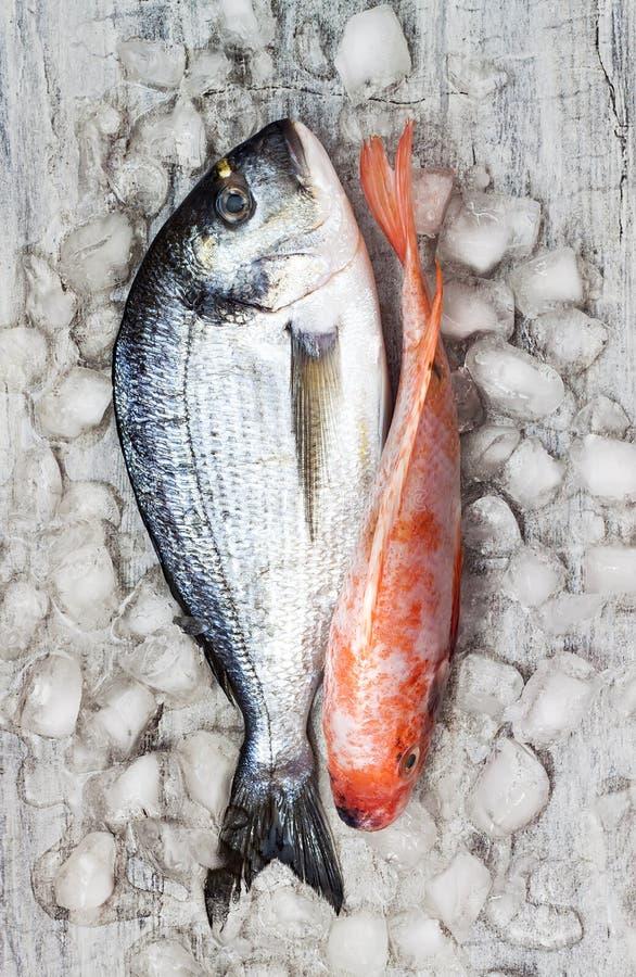 未加工的新鲜的dorada和红色罗非鱼在冰钓鱼 背景烹饪三文鱼海鲜 顶视图,静物画 免版税库存照片