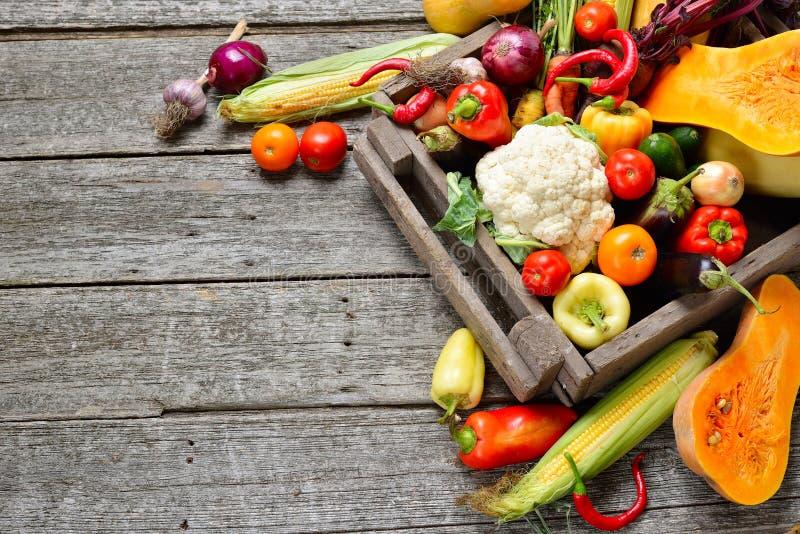 未加工的有机套新鲜蔬菜在树木繁茂的箱子背景中 从庭院的秋天收获 库存图片