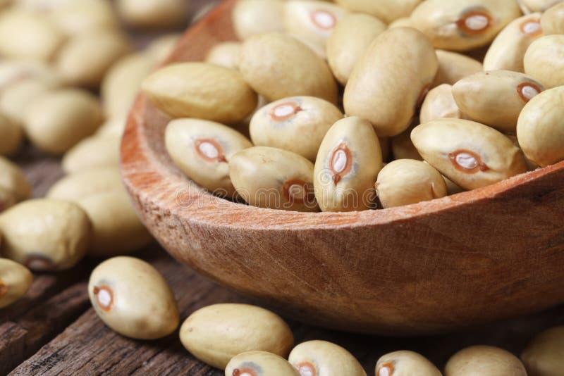 未加工的淡黄的扁豆宏观在木匙子。 库存照片