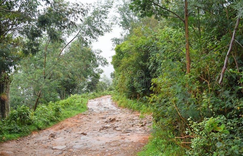 未加工的湿困难的路通过森林和绿叶 免版税库存图片