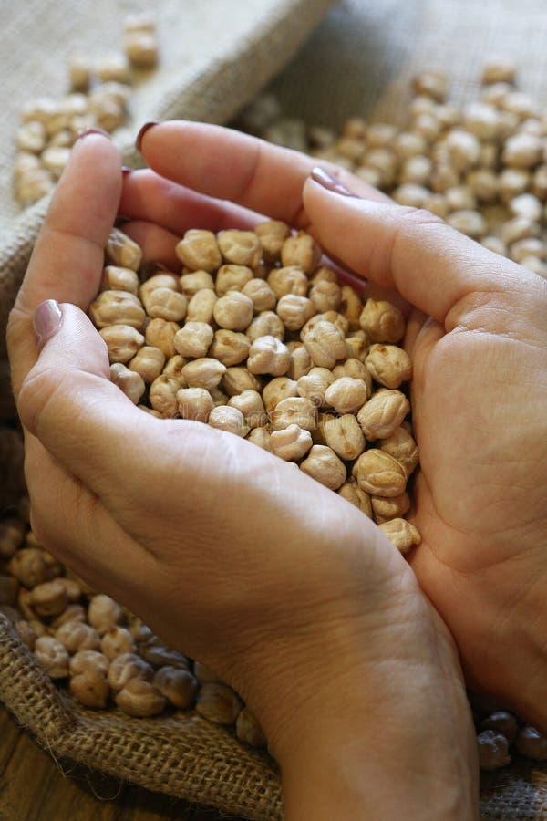 未加工的白色干鸡豆在妇女的手上 免版税库存图片