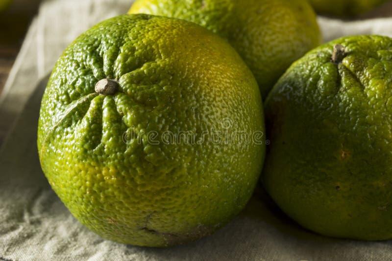 未加工的绿色有机牙买加丑橘 免版税库存照片