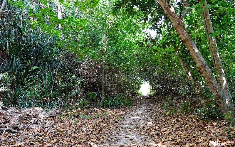 未加工的道路穿过绿色森林-艰苦跋涉通过热带树 免版税图库摄影