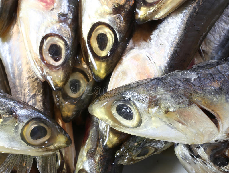 未加工的鲥鱼在鱼市上钓鱼待售 库存照片