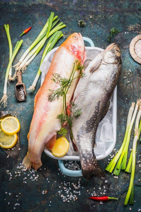 未加工的整个鳟鱼鱼和金虹鳟在盘在盘与冰块和新鲜的烹调成份在黑暗的土气backgroun 免版税库存照片