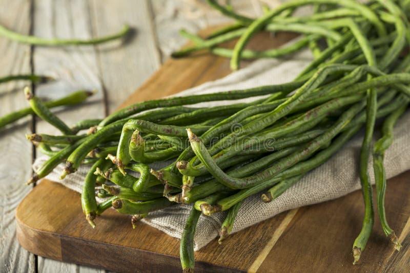 未加工的绿色有机中国长的豆 库存照片