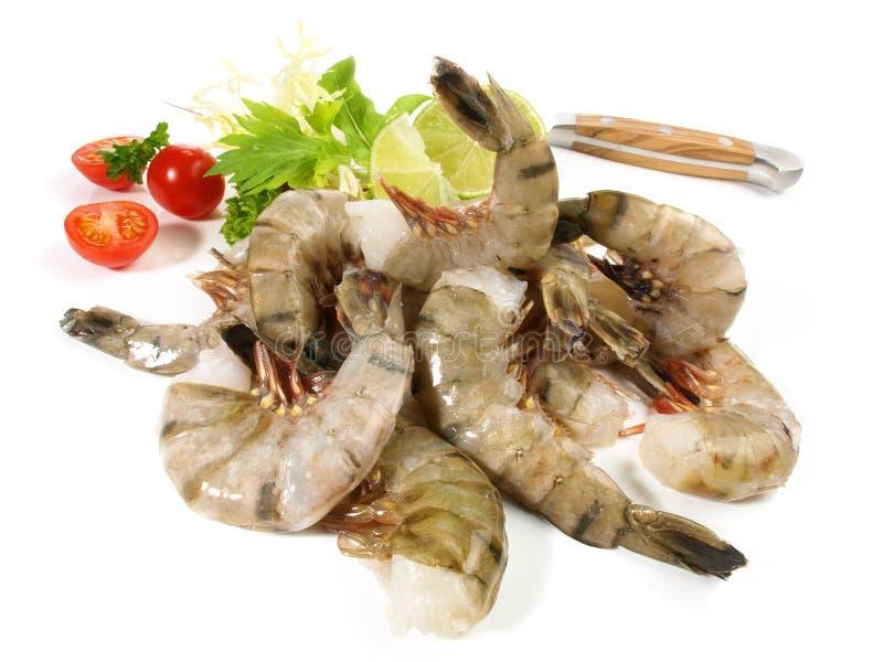 未加工老虎的大虾- 图库摄影