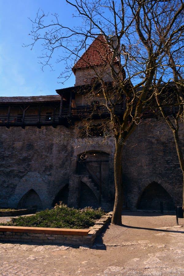 未婚的塔博物馆和咖啡馆在塔林,爱沙尼亚 图库摄影