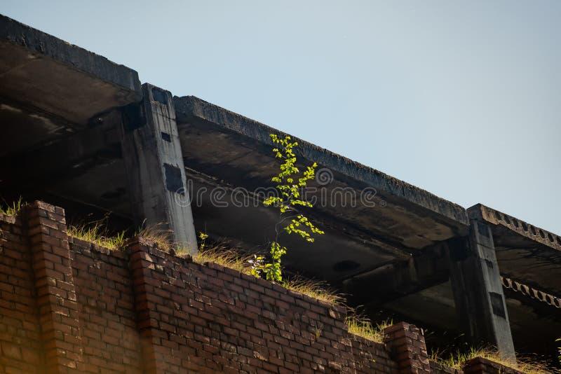 未完成的被放弃的砖瓦房长满与植被 免版税库存图片